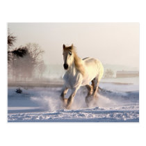 White Horse Galloping Through the Winter Snow Postcard