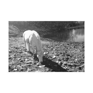 White Horse Grazing by Lake Canvas Print