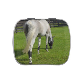 white horse grazing head down in grass jelly belly tin