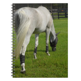 white horse grazing head down in grass spiral note book