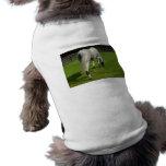 white horse grazing head down in grass pet t shirt