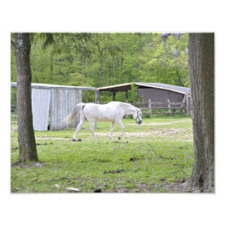 White Horse Grazing in the Field Photo