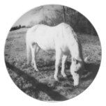 White Horse Grazing Party Plates