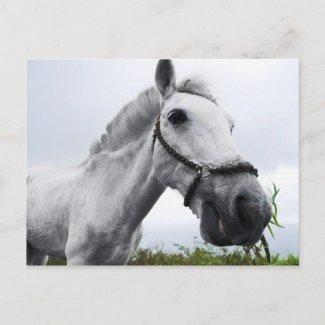White Horse Grazing Postcard postcard