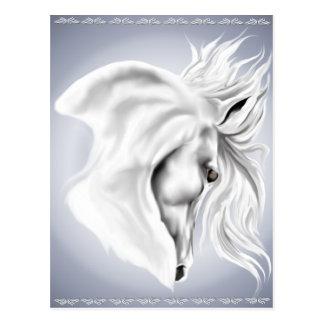 White Horse Head Post Card