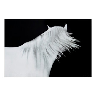 White Horse Head Poster