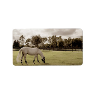 white horse in pasture grazing old style address label