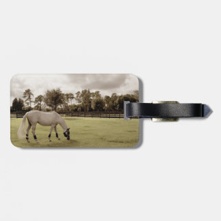 white horse in pasture grazing old style bag tags