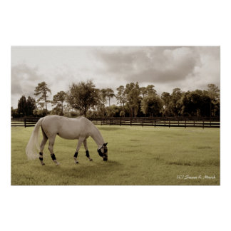 white horse in pasture grazing old style posters