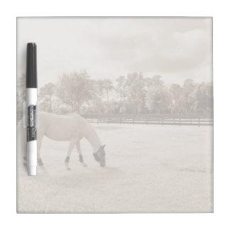 white horse in pasture grazing sepia Dry-Erase board