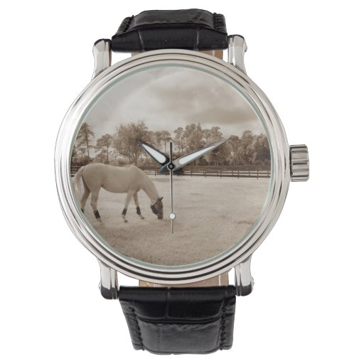 white horse in pasture grazing sepia wristwatch