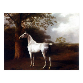 White Horse in Pasture Postcard