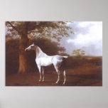 White Horse in Pasture Print