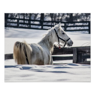 White Horse In Snow Poster