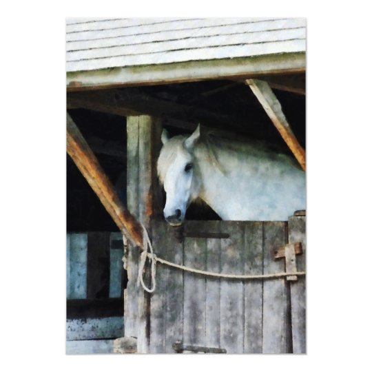 White Horse in Stable Card