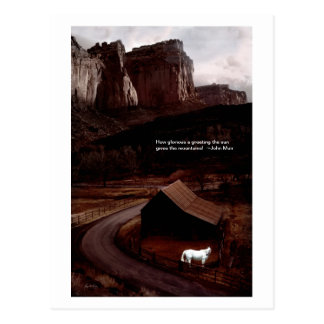 White Horse in the Canyon Postcard