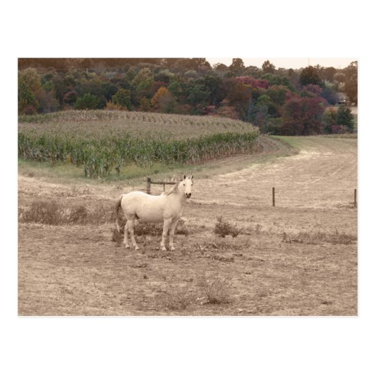 White Horse in the Fall. Postcard