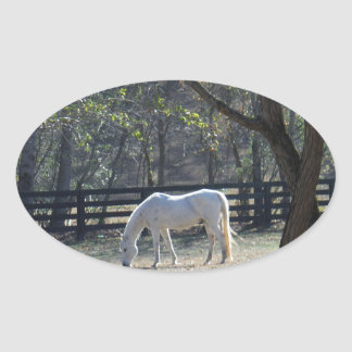 White Horse in trees Oval Sticker
