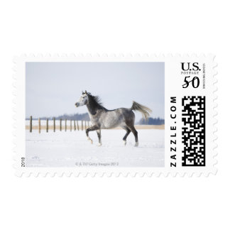 white horse in winter postage
