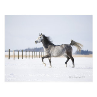 white horse in winter postcard