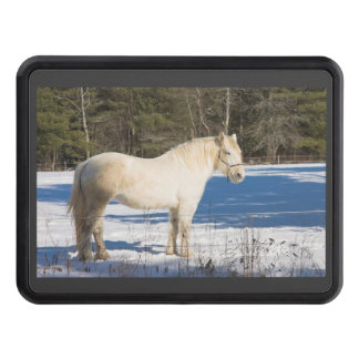 White Horse In Winter Rural Maine Hitch Cover