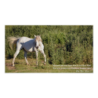 White Horse Inspirational Poetry Photo Poster
