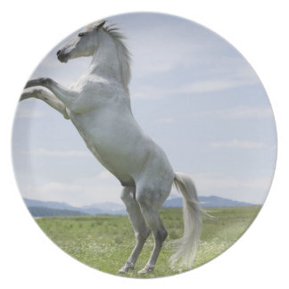 white horse jumping on meadow dinner plate