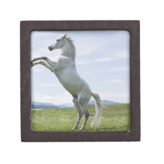 white horse jumping on meadow gift box