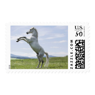 white horse jumping on meadow postage