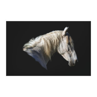 White Horse-Lover Equine Photo Canvas Canvas Print