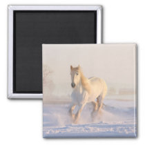 White Horse Lover Western Equestrian Farm Pony Magnet