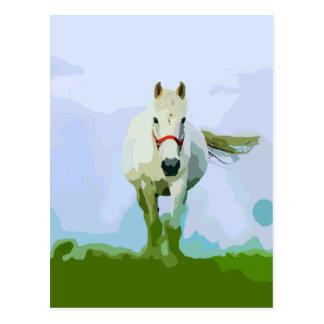 White Horse Painted Portrait Postcard