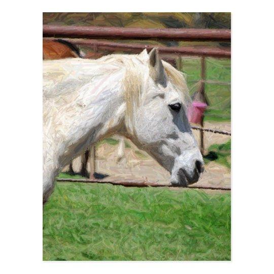 white horse pencil artwork postcard