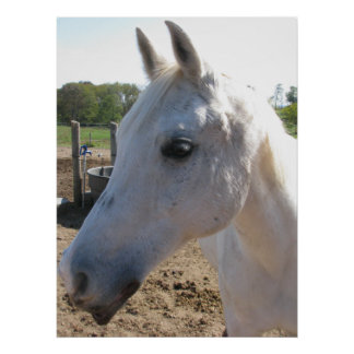 White Horse Photo Posters