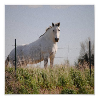 White Horse  picture on canvas Print