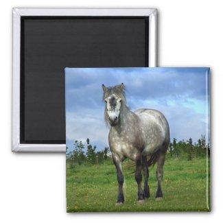 White horse portrait magnet