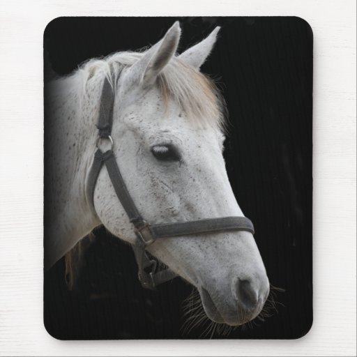 White Horse Portrait on Black Mouse Pads