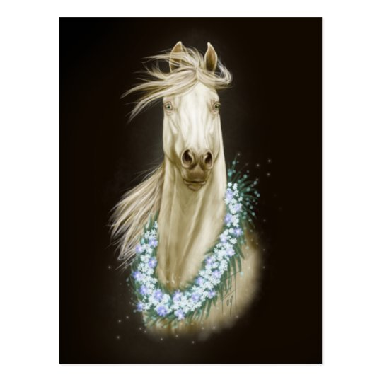 white horse portrait postcard