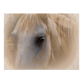 White Horse Portrait Poster