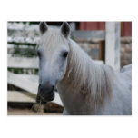 white horse post card