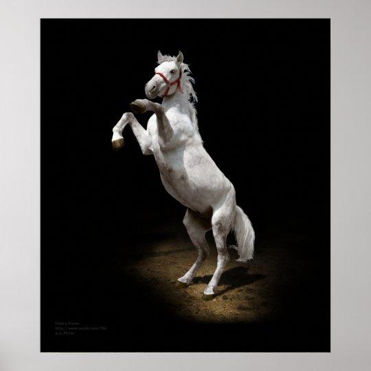 White Horse Prancing Poster