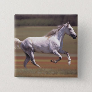 White horse running in field pinback button
