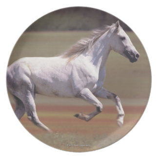 White horse running in field plate