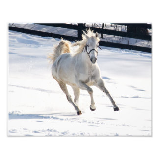 White Horse Running In Snow Photograph