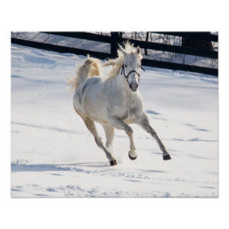 White Horse Running In Snow Poster