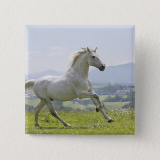 white horse running on meadow button