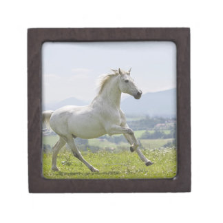 white horse running on meadow keepsake box
