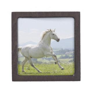 white horse running on meadow keepsake box