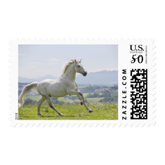 white horse running on meadow postage
