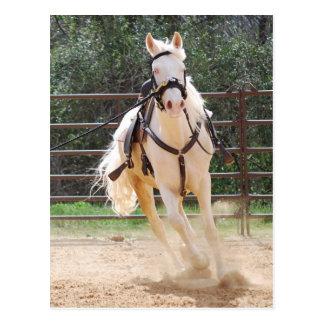 white horse running postcard